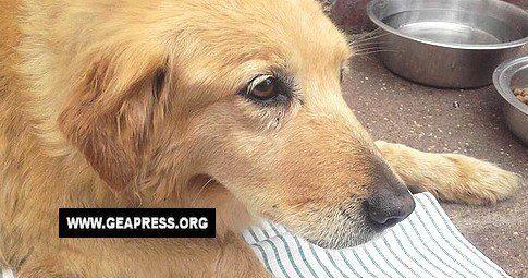 Giustizia per Frittella, cagnolina abusata sessualmente ad Aversa