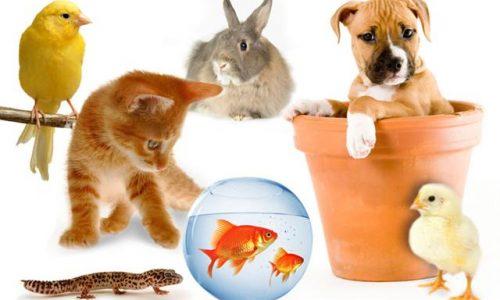 www.animalidacompagnia.it, il portale dedicato ai proprietari di pet