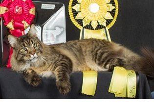 Il gatto più bello d'Italia a Padova  perQuattroZampeInFiera