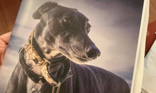 seconda conferenza mondiale antiracing Greyhounds Around the Globe