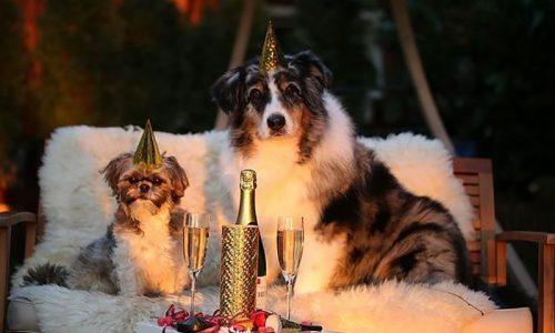 Gli italiani festeggiano la vigilia di Capodanno con il proprio pet