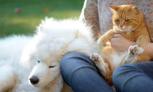 CORONAVIRUS – NON SI SPECULA SULLA VITA DEGLI ALTRI ovvero  su gli  ANIMALI