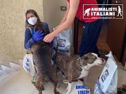 ANIMALISTI ITALIANI ACQUISTA CIBO PER GLI ANIMALI E LO DONA ALLE FAMIGLIE IN DIFFICOLTÀ