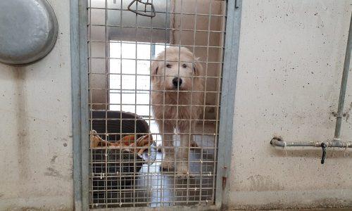 Accesso vietato nei canili e gattili di Roma ai volontari