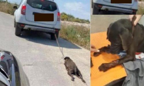 ucciso con estrema crudeltà un povero cane, trascinandolo legato alla macchina
