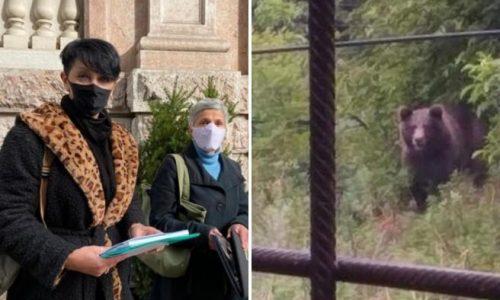 Sciopero della fame per ridare la libertà agli orsi rinchiusi al Casteller di Trento
